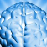 Cerveau 620
