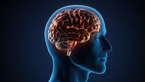 120413_c87qk_cerveau-humain_8