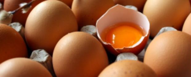Les œufs de batterie