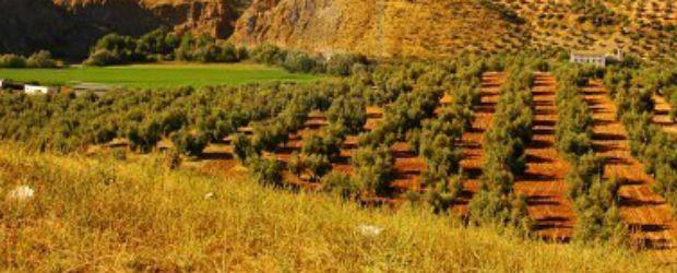 Planter un arbre – 26 Nov/11