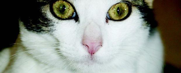 Les chats ont la cote