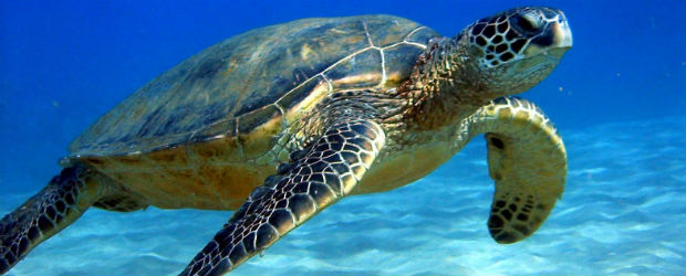 Au secours des tortues…