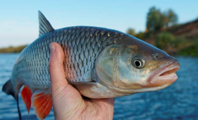 La consommation de poisson a doublé!