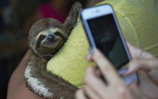 Les selfies, un danger pour les animaux sauvages