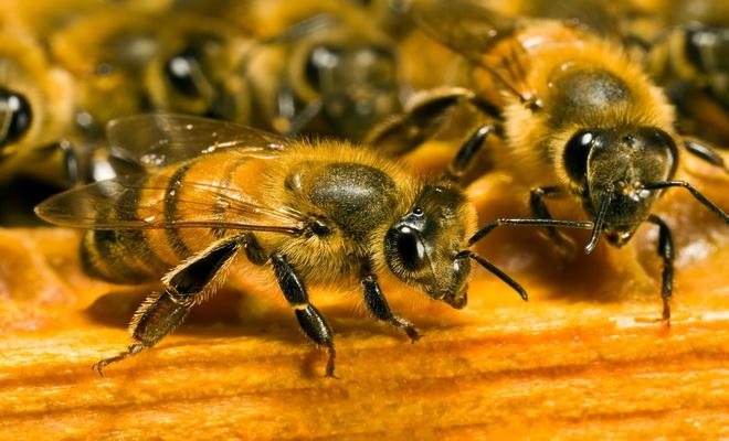 Cet incroyable remède fabriqué par les abeilles